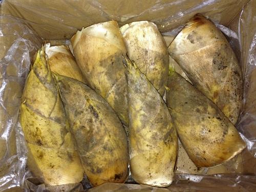 早堀りの鹿児島産筍入荷してます。