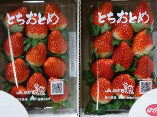 栃木産 とちおとめ 始まりました。