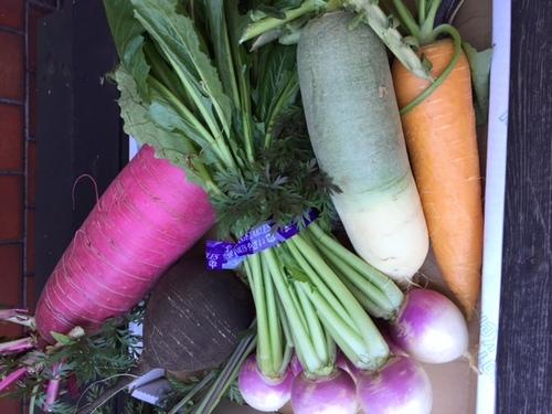 三浦産直彩り野菜届きました