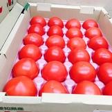 愛知のトマト